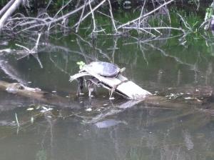 Local wildlife