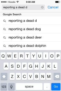 Now I know what to do if I come across a dead dolphin.